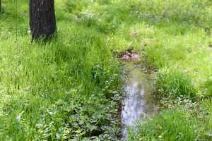 A small puddle with reflection in the spring forest near green grass and trees